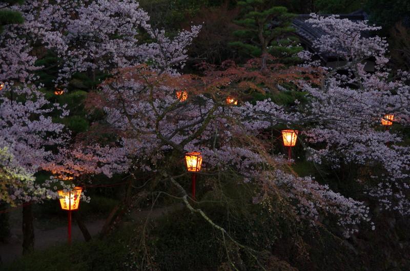 郡山 夜桜