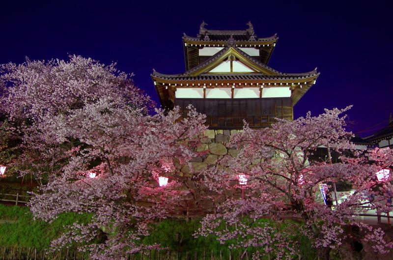 郡山 夜桜1
