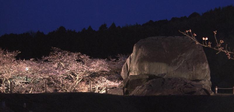 石舞台 桜ライトアップ