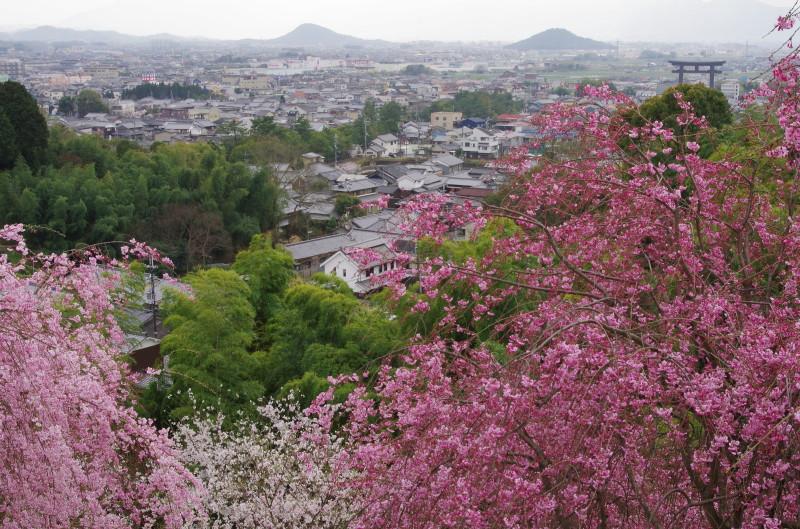 桜井 三輪