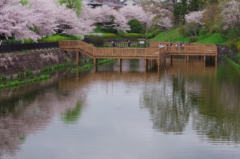 郡山 鰻堀桜