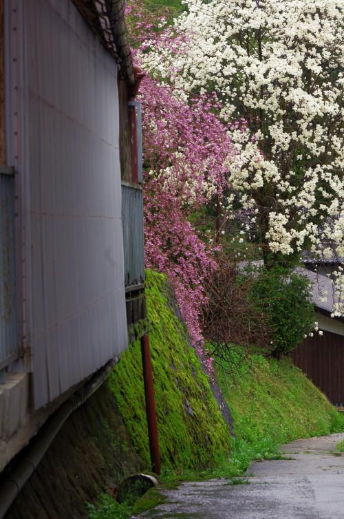 宇陀 桜3