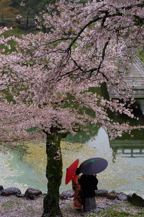 奈良公園 散桜と和傘