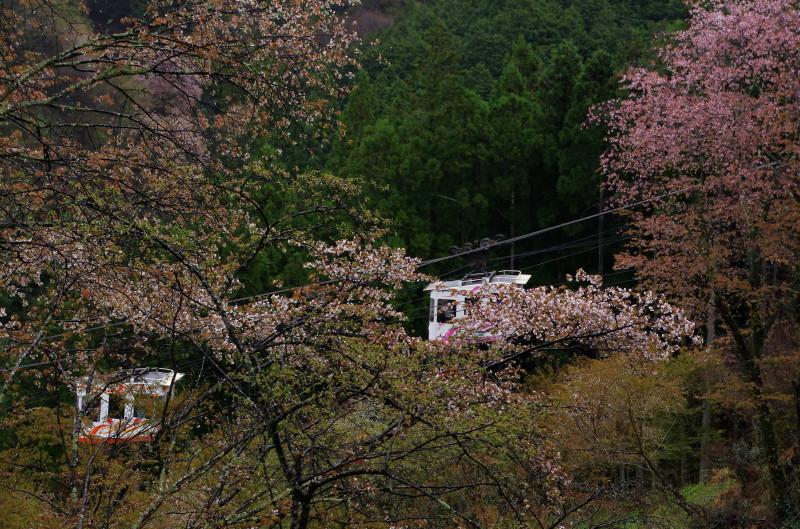 吉野山 下千本ケーブル2