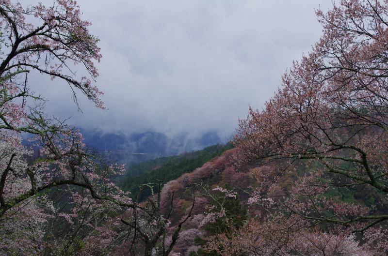 吉野山 下千本から4