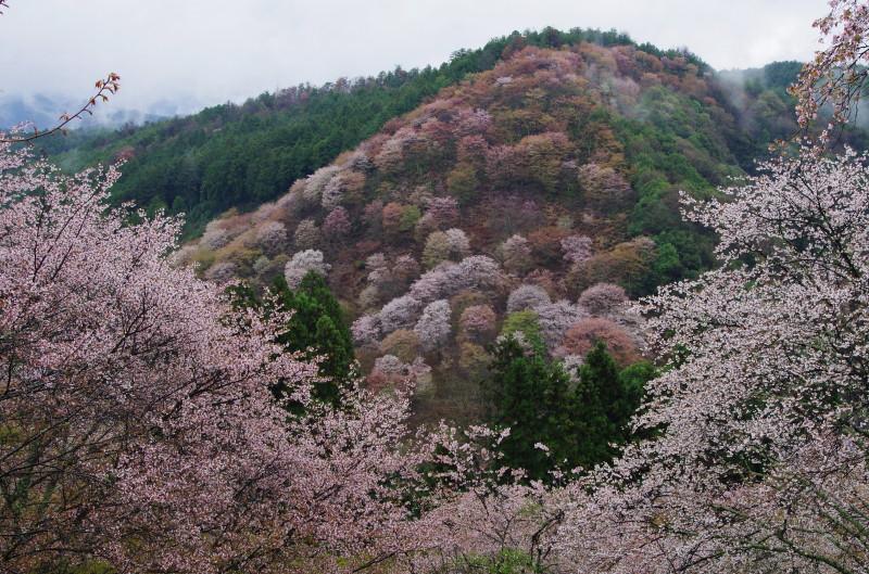 吉野山 下千本から3