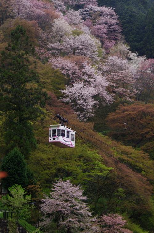 吉野山 下千本ケーブル1