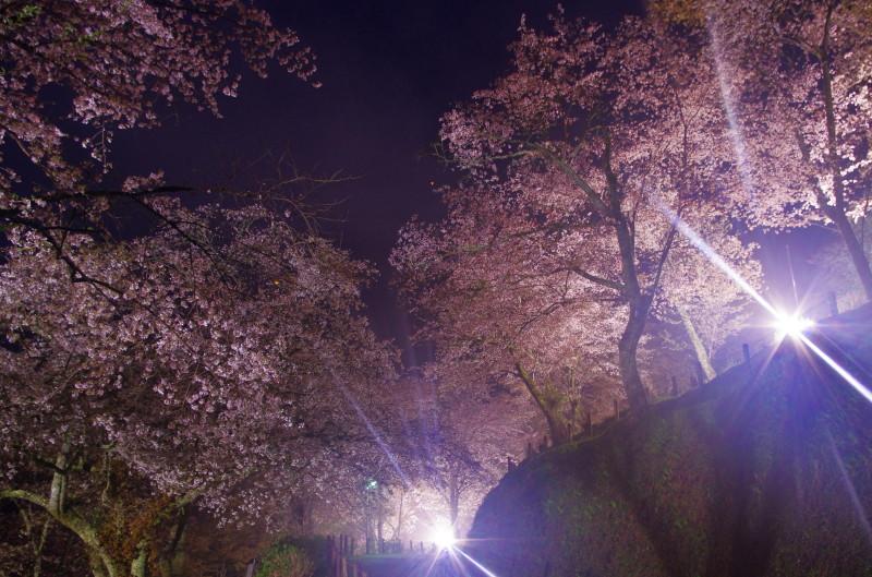 吉野山 下千本ライトアップ1