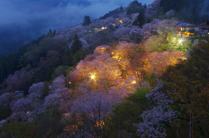 吉野山 下千本ライトアップ0