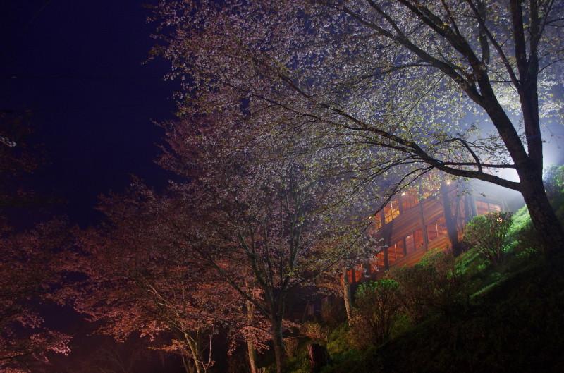 吉野山 下千本ライトアップ