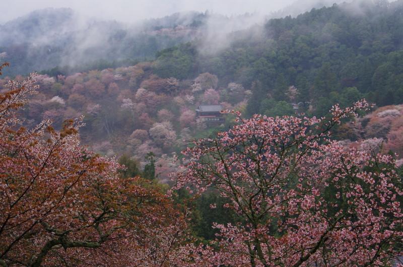 吉野山 中千本 如意輪寺遠景