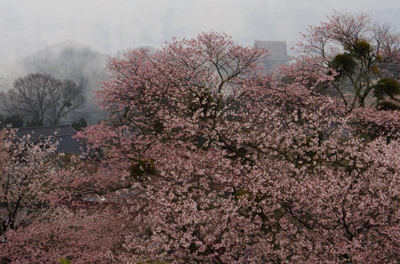 吉野山 金峯山寺の屋根