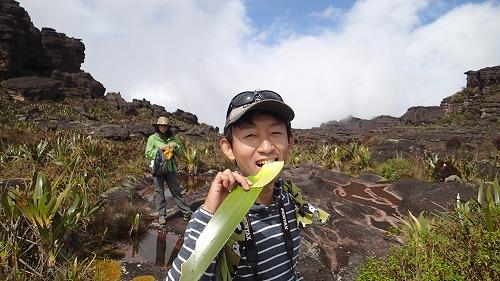 s-ロライマ山 4日目 (49)