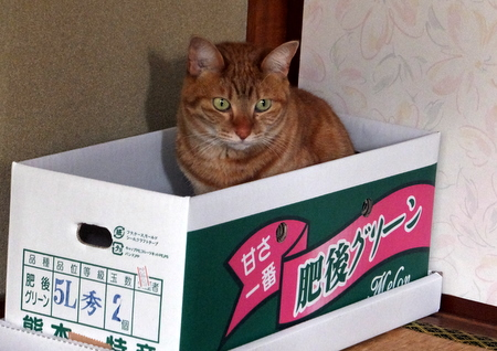 箱入りムスメ1