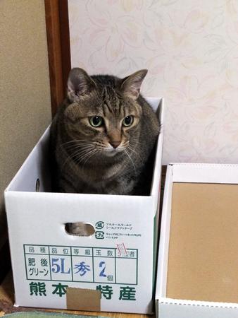 箱入りムスコ1