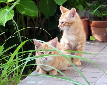 ママと子猫たち6