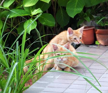 ママと子猫たち5