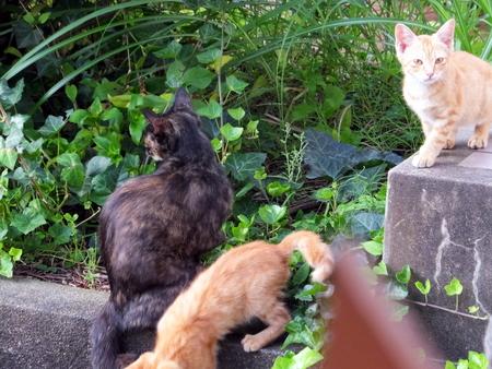 ママと子猫たち3
