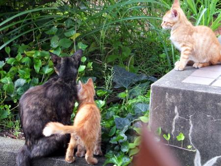 ママと子猫たち1