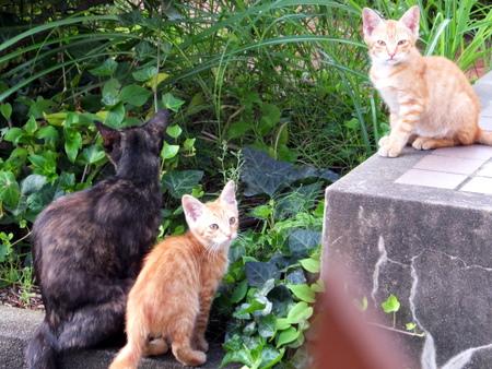 ママと子猫たち2