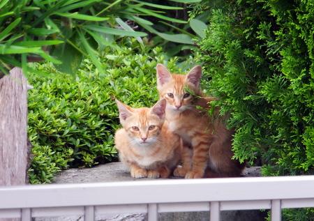 ママと子猫たち8