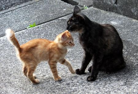 ママと子猫たち7