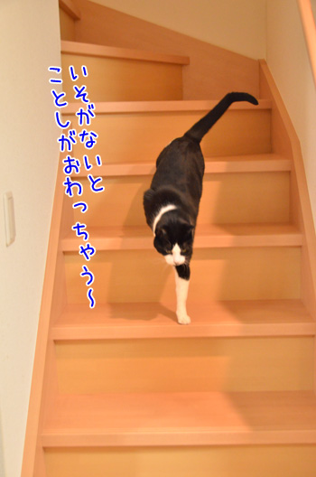 DSC_3424_2.jpg