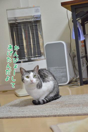 DSC_3461_2.jpg
