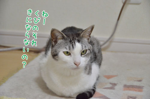 DSC_3830_2.jpg