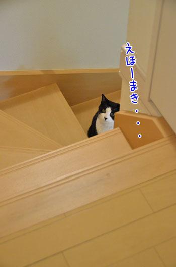 DSC_4117_2.jpg
