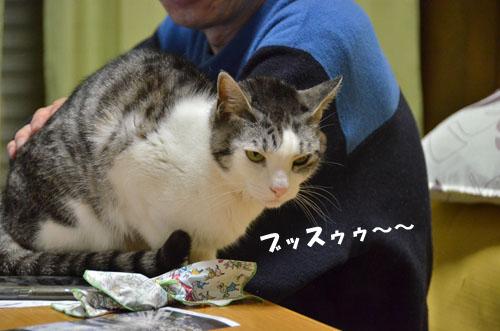 DSC_4378_2.jpg