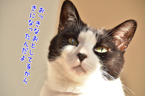 DSC_4796_2.jpg