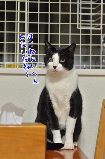 DSC_5076_2.jpg