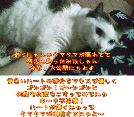 DSC_0178 (4)