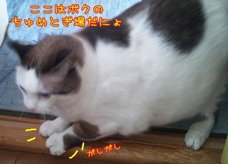 DSC_0006_201502011346323f7.jpg