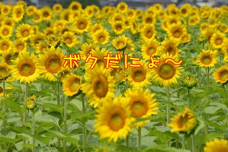 DSC_2041_201501032211092ad.jpg