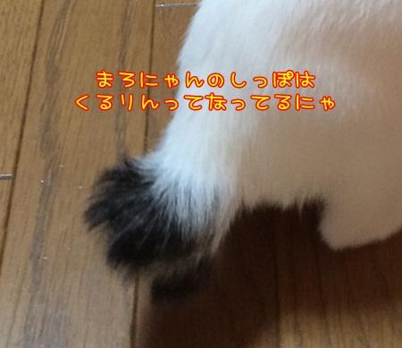 IMG_1430.jpg