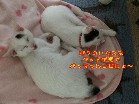 IMG_1627.jpg