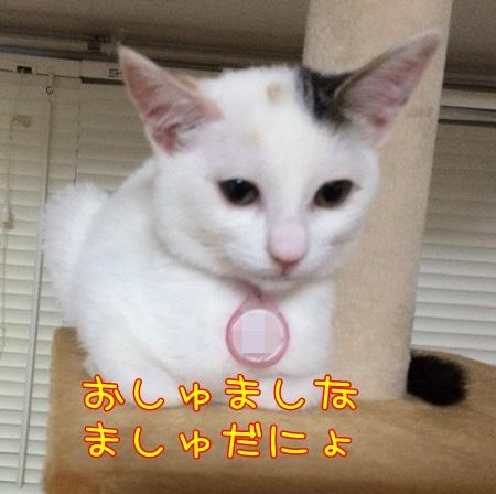 IMG_1634.jpg