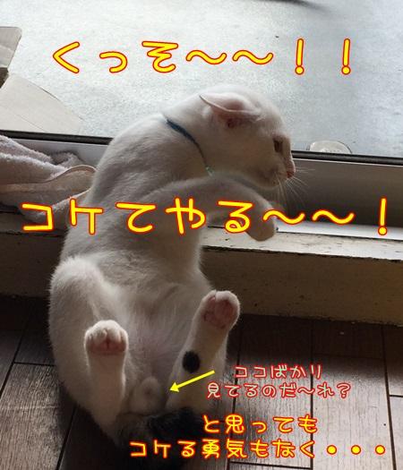 IMG_1705.jpg