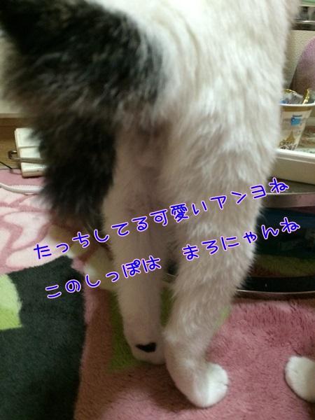 IMG_1828.jpg