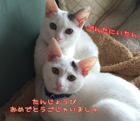 IMG_2140.jpg