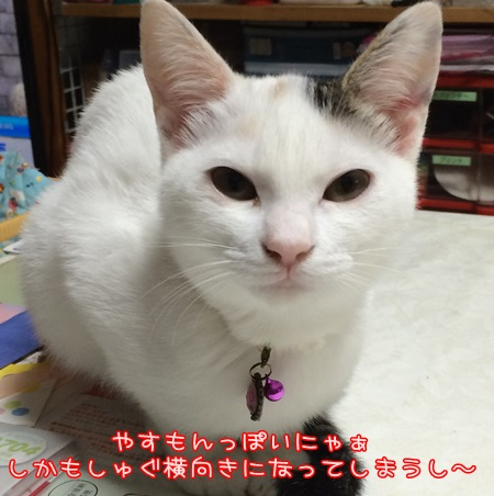 IMG_2163.jpg