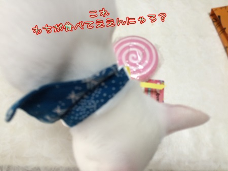 IMG_2737.jpg