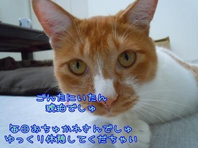 kohaku_20150415112231b04.jpg