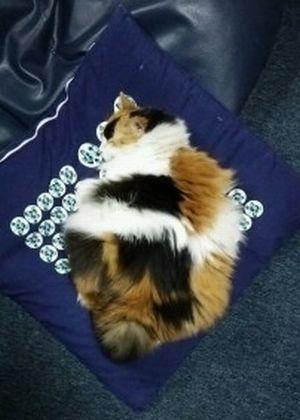 cat_2527_2r.jpg