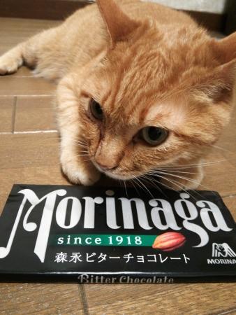 猫とビターチョコレート(森永)