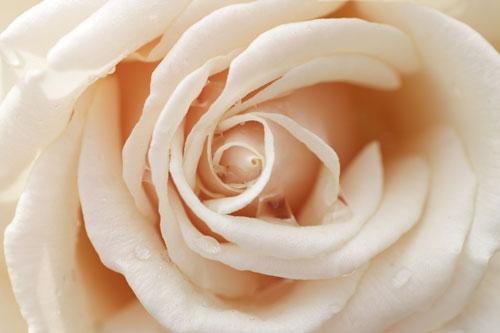 20150517薔薇園7