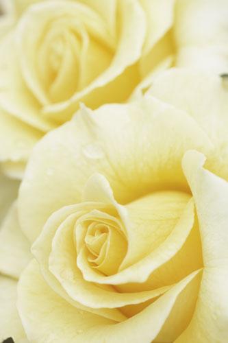 20150517薔薇園18