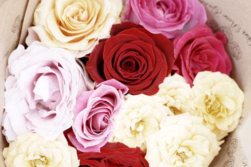 20150517薔薇園26